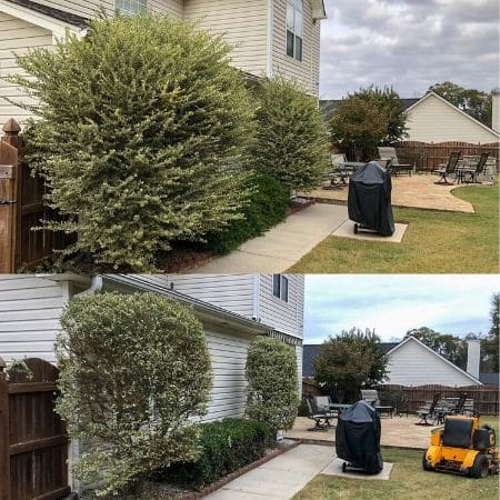 Before and after a shrub pruning with commercial lawn mower in lawn.