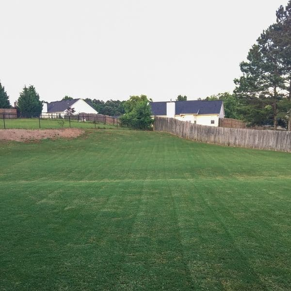 Properly maintained Bermuda Grass lawn.