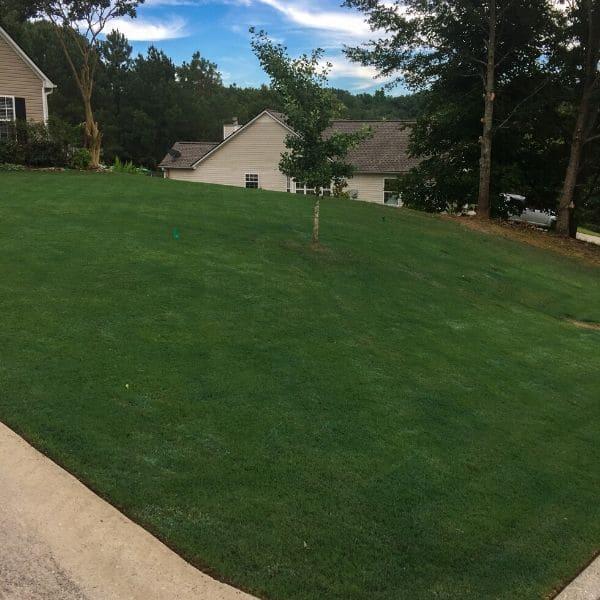 Emerald green lawn comprised of Bermuda Grass.