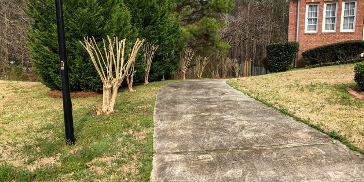 A row of trimmed Crape Myrtle down the left side of the driveway in the front yard.