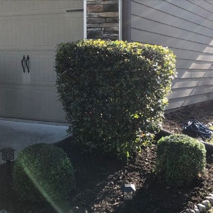 Three perfectly trimmed shrubs in a dark mulch bed lined in rocks next to a garage door.