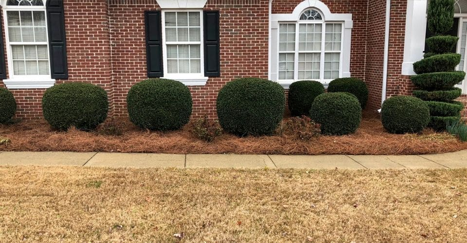 Front landscaping bed covered in pine straw around a brick house with decorative bushes.