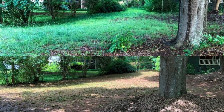 Before and after photo of an overgrown area in a lawn that has been cleaned up.