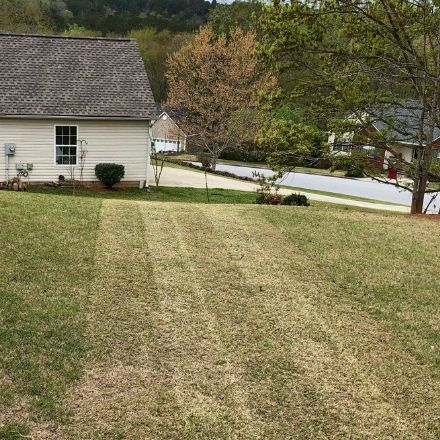 Perfectly cut strips of grass in the backyard during a weekly service.