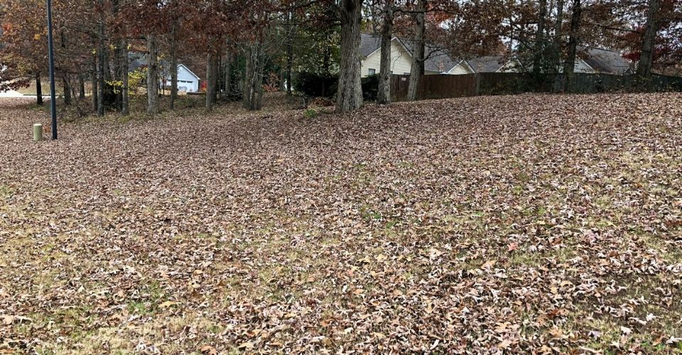 Leaves covering front yard.