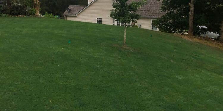 Dark luscious green golf course looking backyard, with perfect mowing lines around a single young tree.