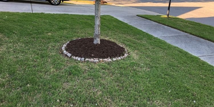 Single tree in front yard surrounded by a rock lined dark mulch bed.