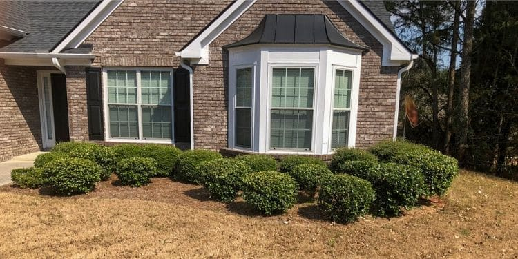 Freshly trimmed shrubs in a front landscape bed around a bay window.