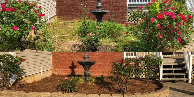 Before and after photo of water feature in landscaping bed with roses.
