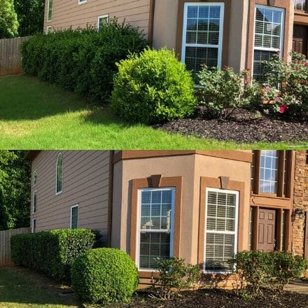 Photos of shrubs before and after a pruning service.